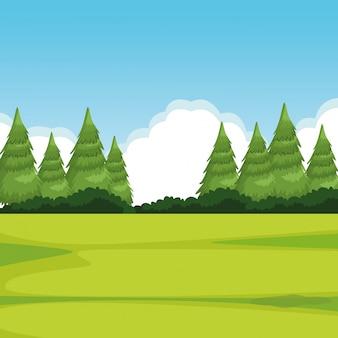 Paisagem da floresta com pinheiros