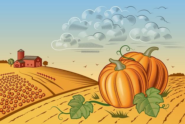 Paisagem de colheita de abóbora