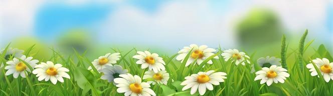 Paisagem de primavera. grama verde e camomila. panorama horizontal 3d