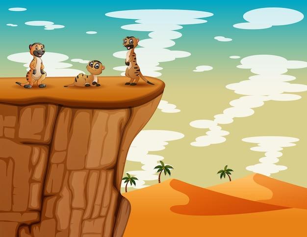 Paisagem desértica com três suricatos no topo do penhasco