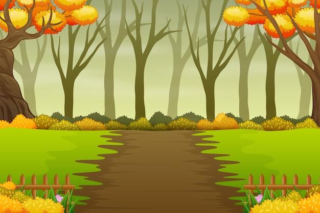 Paisagem do caminho da floresta no outono com árvores nuas e amarelas