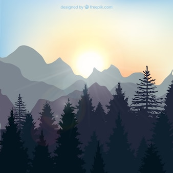 Paisagem do nascer do sol na floresta