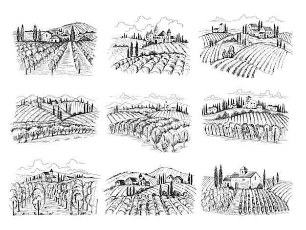 Paisagem do vinhedo. vinhas de fazenda com casas agrícolas desenhadas à mão