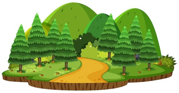 Paisagem natural de colinas verdes e pinheiros
