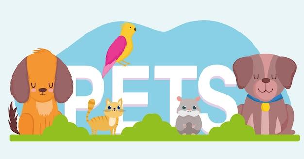 Palavra de animais de estimação, cão fofo gato hamster e ilustração vetorial de animais papagaio