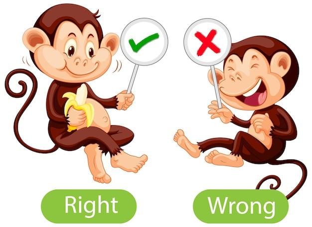 Palavras opostas com certo e errado