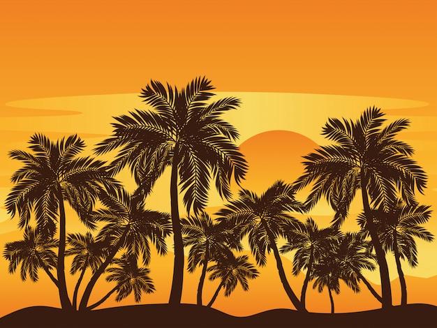 Palmeira ao pôr do sol