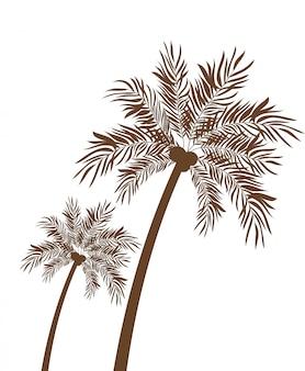 Palmeira com silhueta de coco