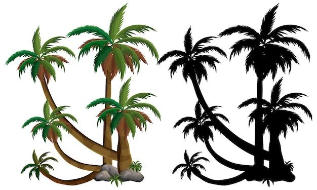 Palmeira e sua silhueta em fundo branco