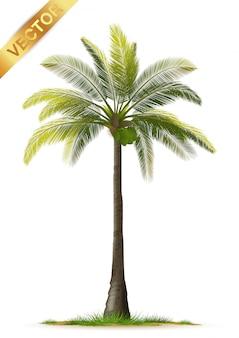 Palmeira realista isolada