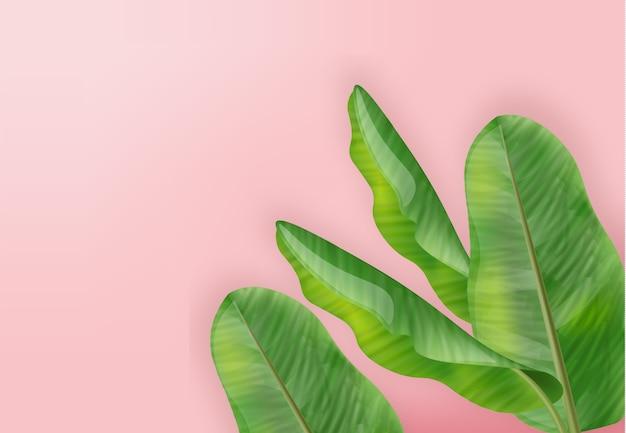 Palmeira tropic deixa o fundo do verão