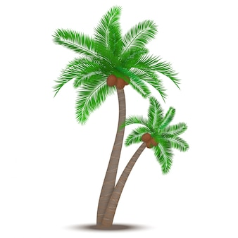 Palmeira tropical com cocos símbolo isolado ilustração vetorial