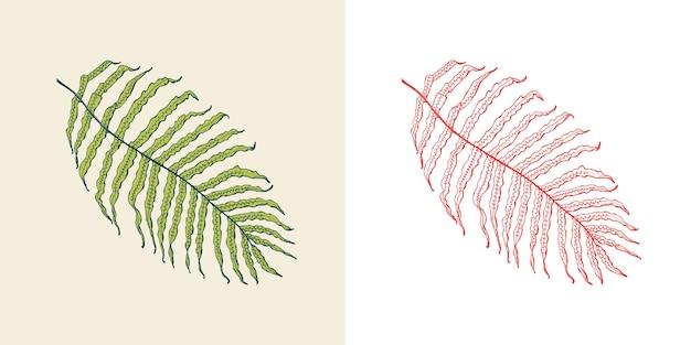 Palmeira tropical ou exótica, folhas e folhas vintage samambaia flores gravadas desenhadas à mão botânica