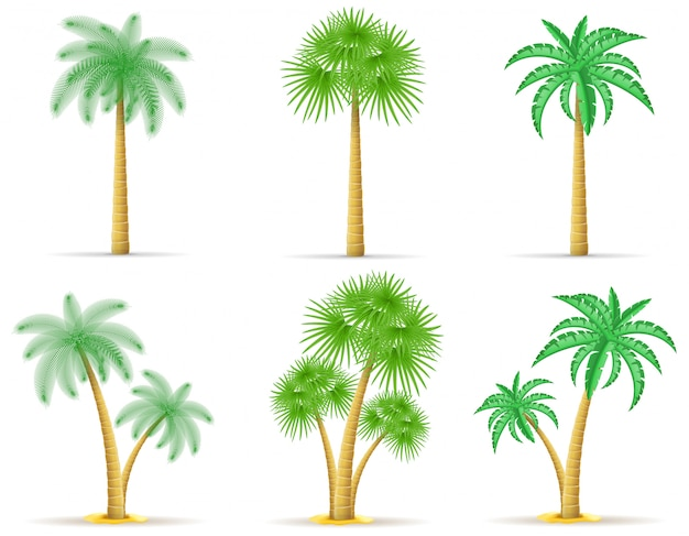 Palmeira vector a ilustração