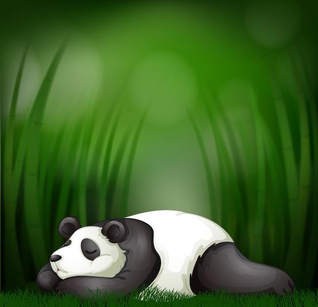 Panda a dormir no modelo de bambu