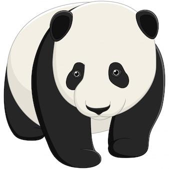 Panda bebê fofo isolado no fundo branco