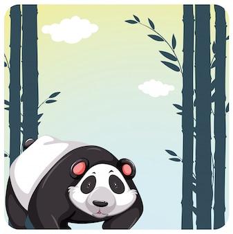 Panda bonito