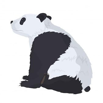 Panda em um fundo branco. bom para cartões postais de design, camisetas e banners.