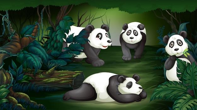 Panda na floresta escura