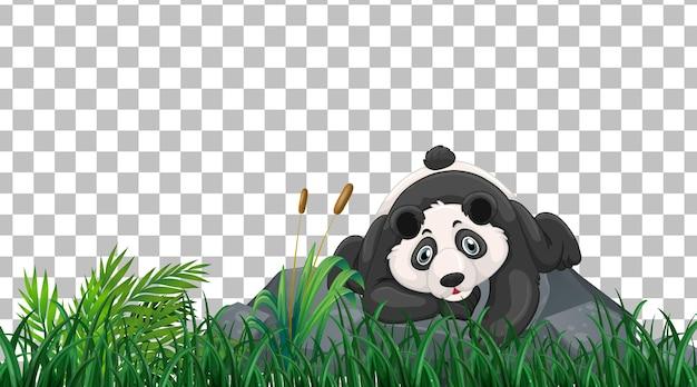Panda no campo de grama em fundo transparente