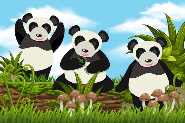 Pandas adoráveis na cena da selva
