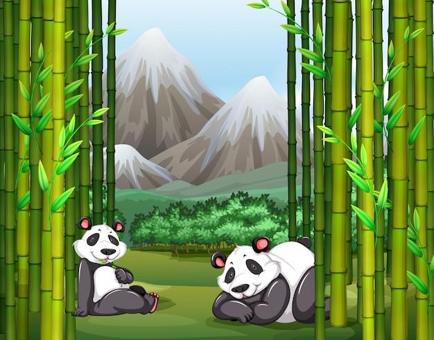 Pandas e floresta de bambu