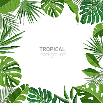 Pano de fundo quadrado ou fundo com moldura ou borda feita de folhagem tropical luxuriante verde ou folhas exóticas de plantas da floresta