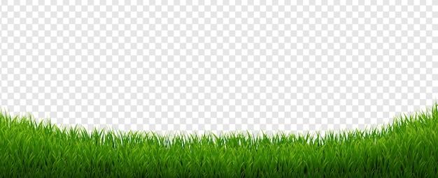 Panorama da grama verde com fundo branco