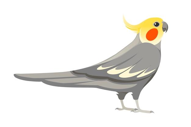 Papagaio adulto de periquito cinza normal (nymphicus hollandicus, corella) desenho animado pássaro design ilustração em vetor plana isolada no fundo branco.