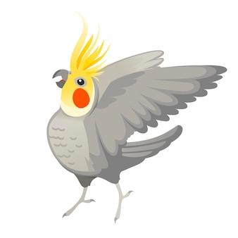 Papagaio adulto de periquito cinza normal olhando para você e batendo sua asa (nymphicus hollandicus, corella) desenho animado pássaro design ilustração vetorial plana isolada no fundo branco.