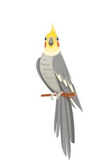 Papagaio adulto fofo de periquito cinza normal sentado no galho e olhando a ilustração vetorial de design