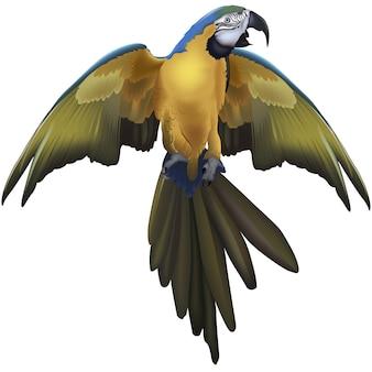 Papagaio arara azul e amarelo