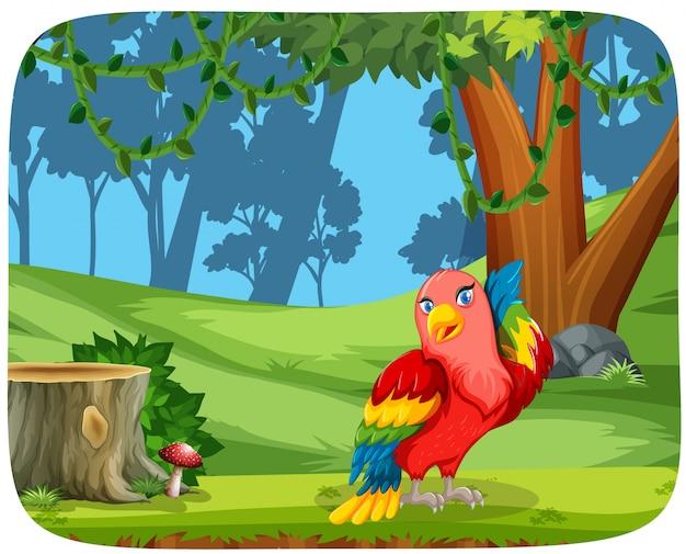 Papagaio bonito na cena da natureza