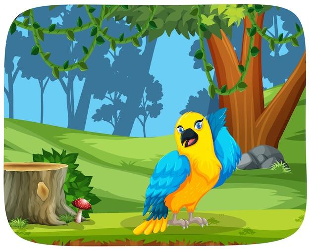 Papagaio colorido em cena de madeira