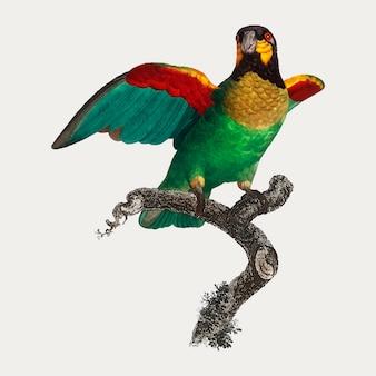 Papagaio de laranja-bochechas