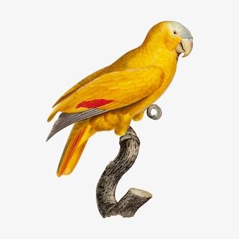 Papagaio-de-testa-azul