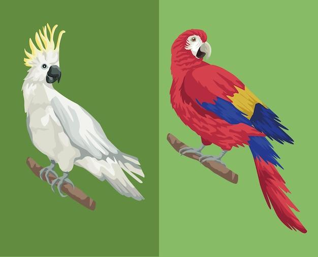 Papagaio e cacatua