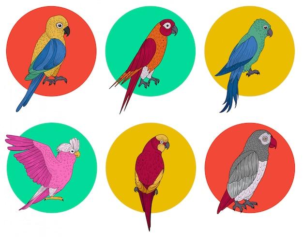 Papagaio exótico. pássaro tropical. vários papagaios. aves diferentes. conjunto de pássaros. desenhado à mão