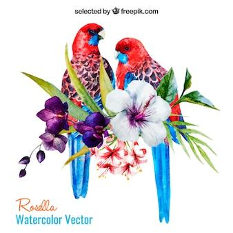 Papagaios da aguarela e flores