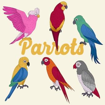 Papagaios exóticos. mão desenhada ilustração em vetor