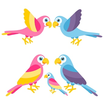 Papagaios fofos