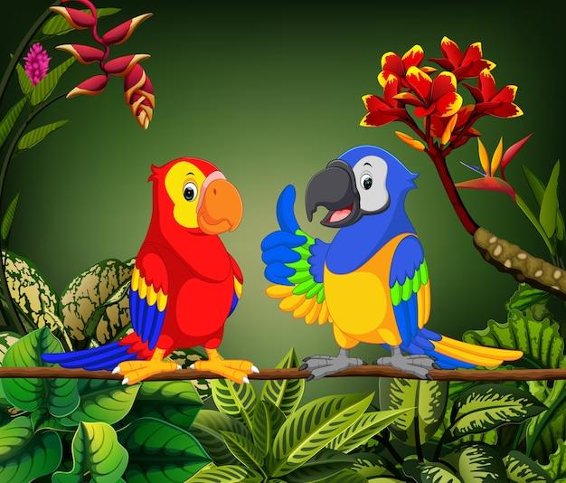 Papagaios lindos estão falando no caule