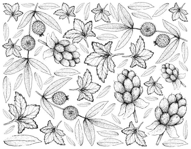 Papel de parede de ilustração de frutas de baga de esboço desenhado à mão