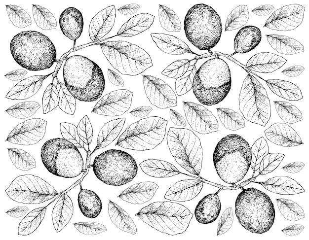 Papel de parede de ilustração de frutas frescas de esboço desenhado à mão