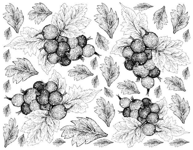 Papel de parede desenhado mão de jostaberries maduras no fundo branco