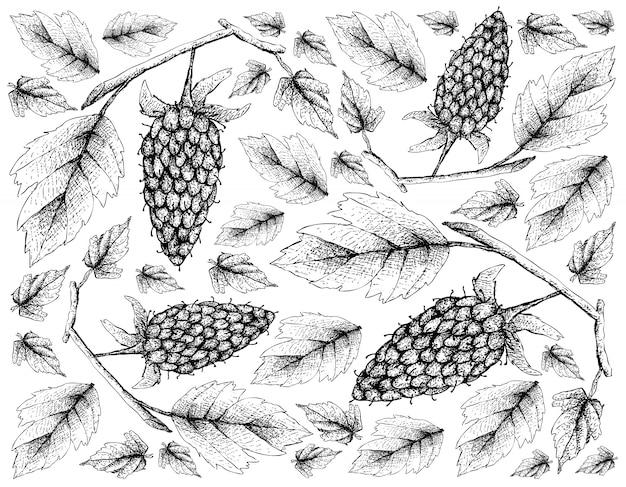 Papel de parede desenhado mão de loganberry no fundo branco