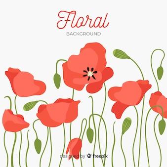 Papoila vermelha flores vista frontal fundo