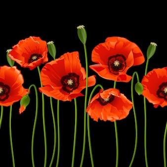 Papoilas vermelhas em uma fileira em fundo preto. ilustração vetorial