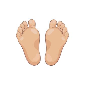 Par de solas de pé de bebê recém-nascido, vista inferior. pequenos pés rechonchudos com salto bonito e dedos do pé. cores de pele caucasiano realista. ilustração, estilo cartoon mão desenhada, isolado no branco.