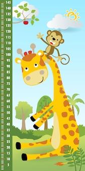Parede de medição de altura com macaco escalando o pescoço da girafa para pegar uma fruta